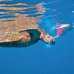 """""""Honu"""" Adventure On Maui..."""