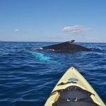 Spiritual Moment... with New Humback Whale Calf!