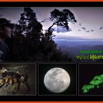 Monteverde Wild Hikes Night Guided Adventure in the cloud forest, Costa Rica