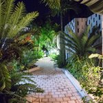 Walkway and Cycads