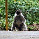Jungle Retreat Photo