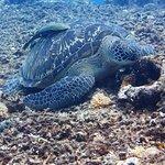 IMG_3266 turtle-1_1499609605020_large.jpg