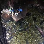 Photo of SEA LIFE Bangkok Ocean World