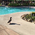 A visitor at the pool.