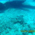 Green Sea Turtles and other marine life