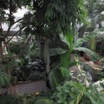 Butterfly gardens inside