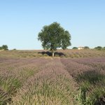 Photo of Podere dell'Arco Country Charme