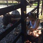 Donkey cuddles