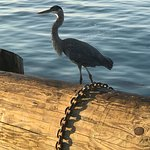 wildlife on wharf