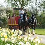 Shire Horse Weekend