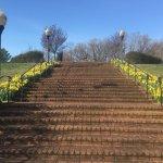 Spring time daffys
