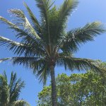 Palm Tree May 2017
