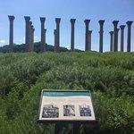 Foto di U.S. National Arboretum