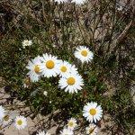 Foto de Oregon Dunes National Recreation Area