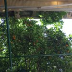 The Wild Orange Trees