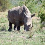Pilanesburg Safari - Rhino
