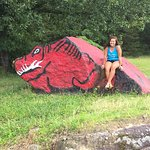 My daughter attends University of Arkansas-Fayetteville & we found a hog.