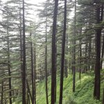 Foto di Wildflower Hall, Shimla in the Himalayas