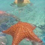 Belle étoile de mer !