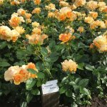 Foto de Prinsenhof Gardens