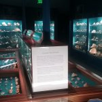 The Sea Shell Room
