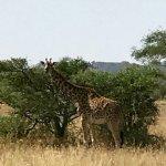 Central Serengeti