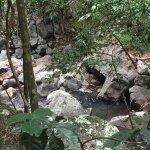 Foto de Tamborine Rainforest Skywalk