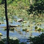 Wildwood Park Photo
