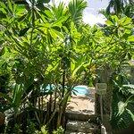Photo de Vipa Tropical Resort