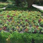 Photo de Royal Botanic Garden (Real Jardin Botanico)