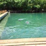 Foto de Dolphin Discovery Tortola