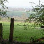 Pine Woods at Valley Gardens Harrogate