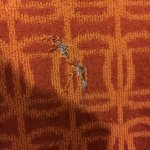 Ripped carpet in our room