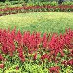 Treillage garden photo by ketan deshpande minnesota