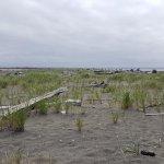 Grassy sand.