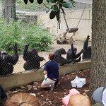 Foto de Chattanooga Zoo