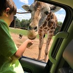 Up close and personal with a giraffe!