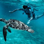 My son swimming with the sea turtles at Akumal Bay, priceless...