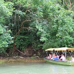Foto de Jungle Land Panama: Day Excursions