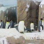 those cute pinguins