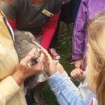 Kiwi release on Tiritiri Matangi.