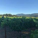 Vineyard Country Inn Photo