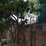 Photo of Mansingh Palace, Agra