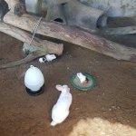 Jong's Crocodile Farm & Zoo Foto
