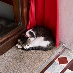Debu the cat - she's not the only one who finds Seven Terraces so cozy and comfortable