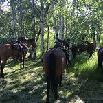 Horses resting at the breakfast ride