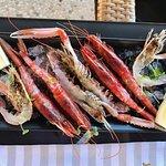Scampi Crudi, Gamberi crudi di Sicilia – Raw langoustine, Raw Sicilian red prawns