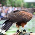 Photo of Kobe Animal Kingdom