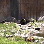 Maggies Private Spot, Grizzly Encounter, Bozeman, MT