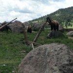 Jake & Maggie, Grizzly Encounter, Bozeman MT.